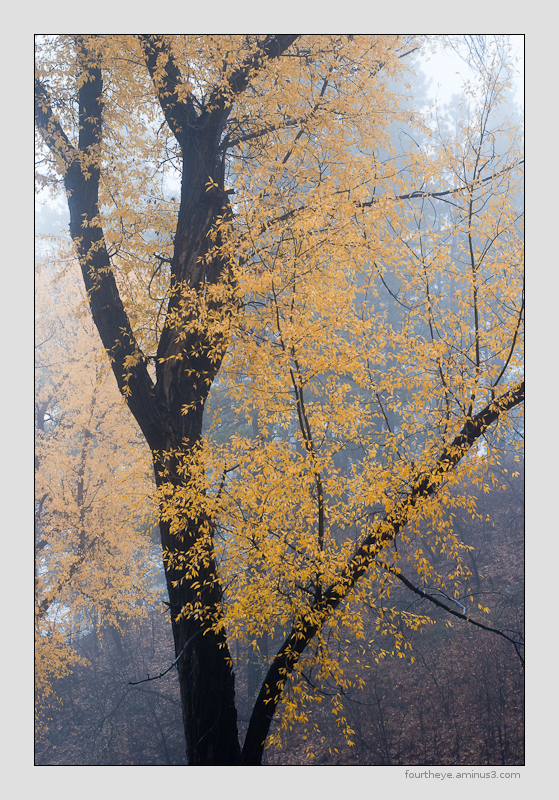 autumn tree in fog