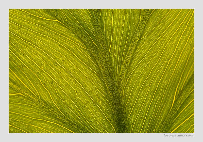 abstract leaf macro