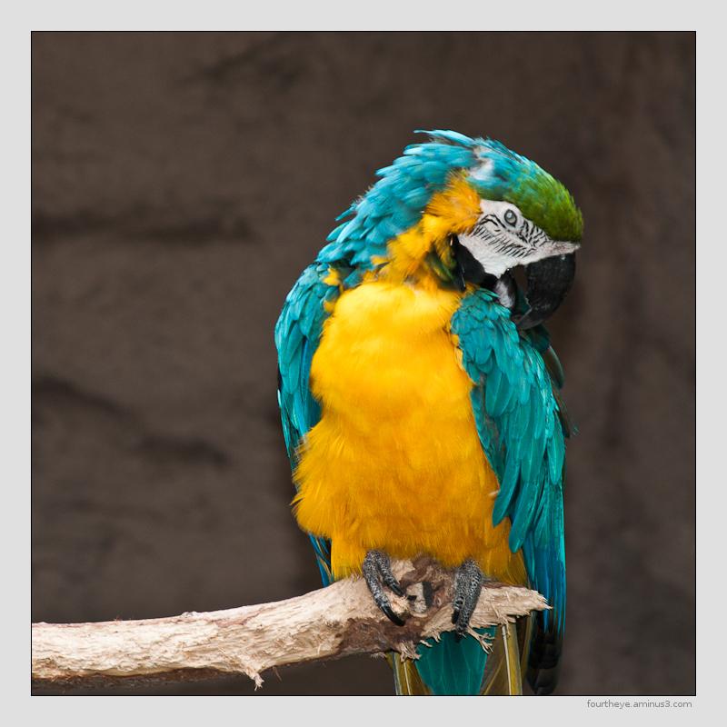 parrot Tucson zoo