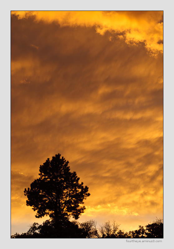 tree and fiery sunset
