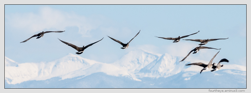 geese and mountains