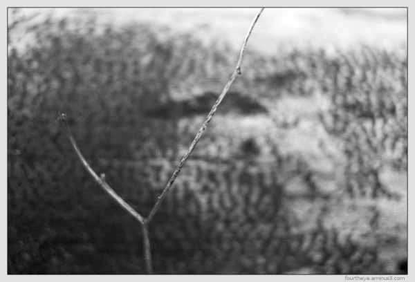 abstract twig