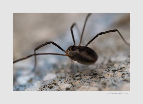 spider impression