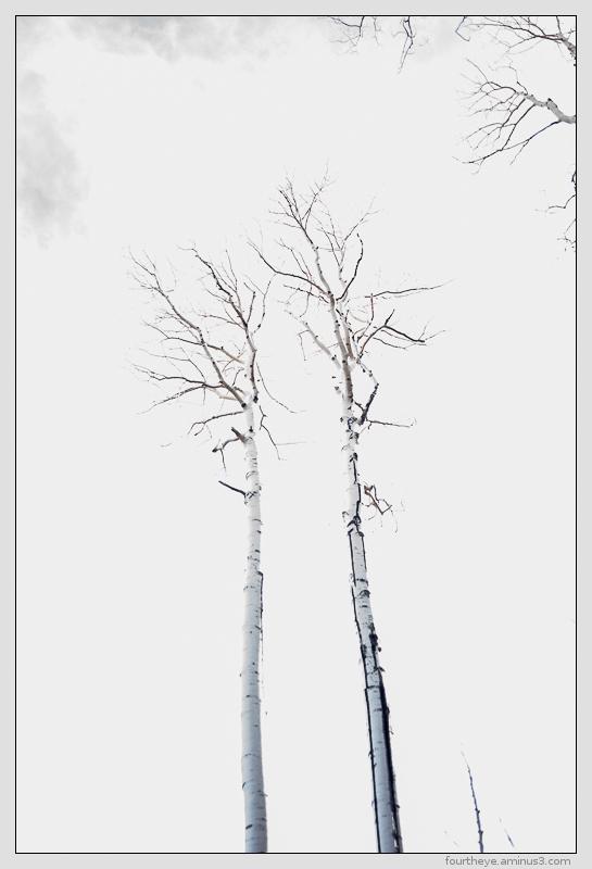 sky tree abstract