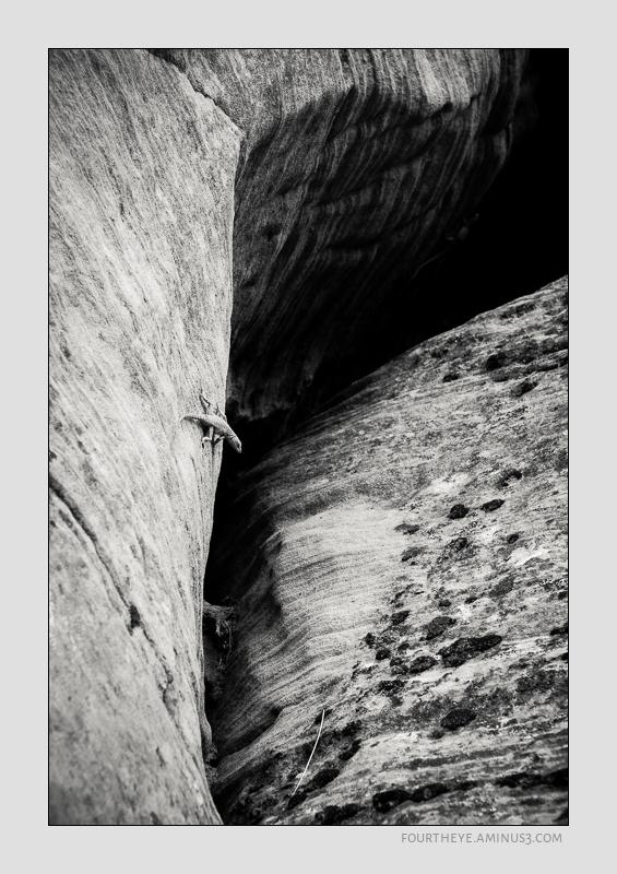 desert cliff lizard