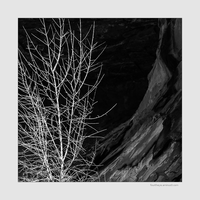 desert canyon tree