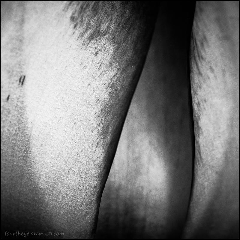 tulip macro abstract