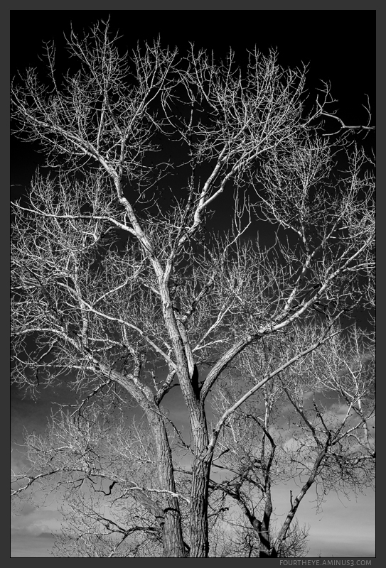 tree ying yang