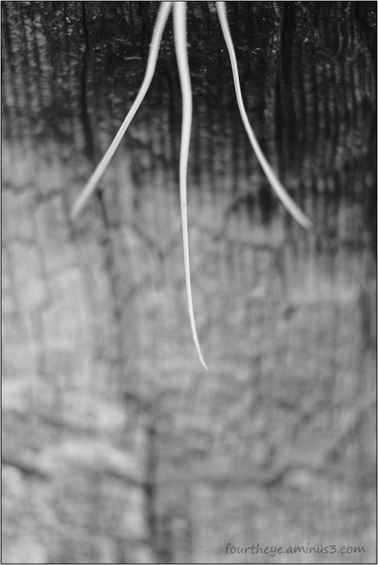 pine needle tree abstract