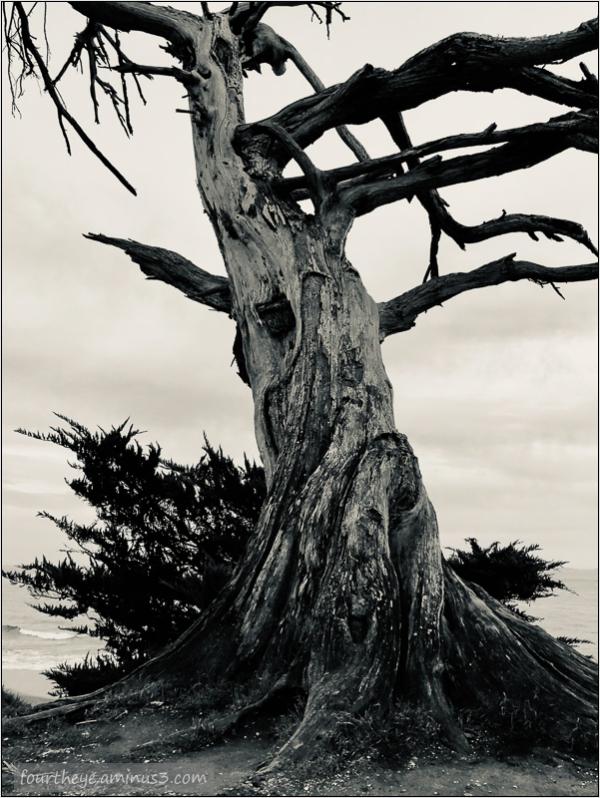 B&W tree on ocean coast