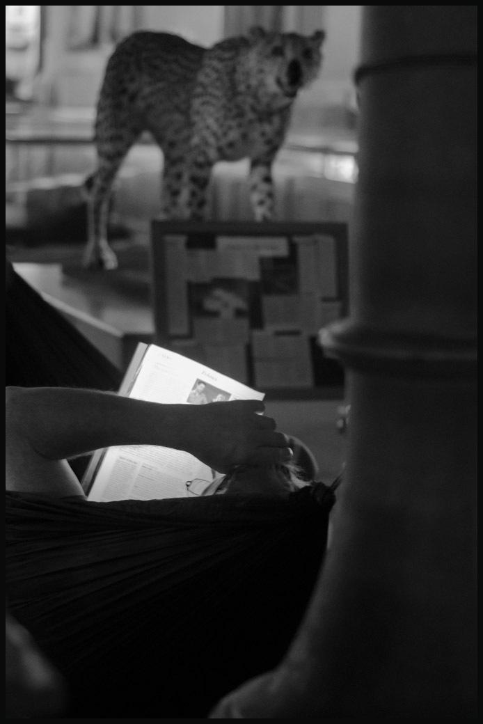 Hammock (and cheetah)
