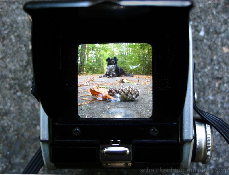 dog through antique camera
