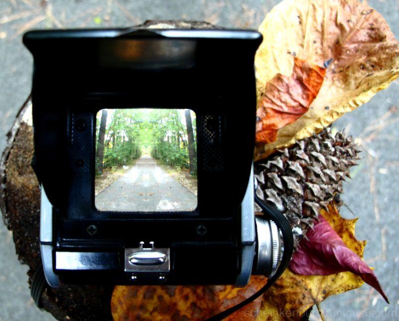 nature trail through antique camera