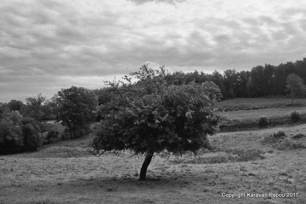 Automne en Creuse  7 (2011)