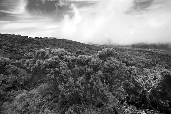 Réunion 25