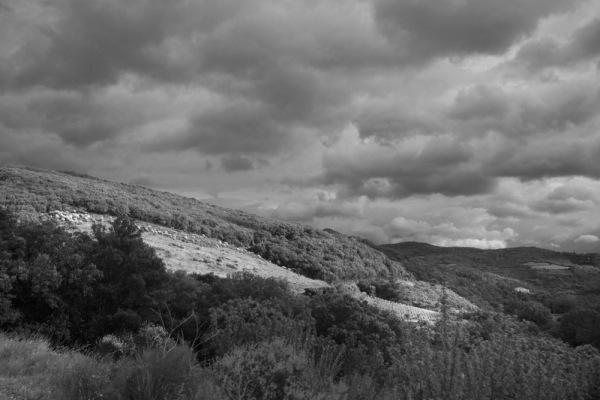 Le  haut Languedoc (5)