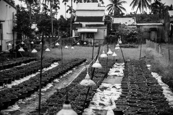 Vietnam 34