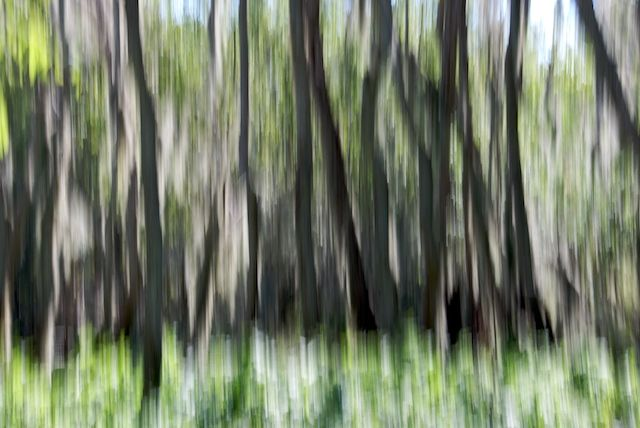The Painted Forest