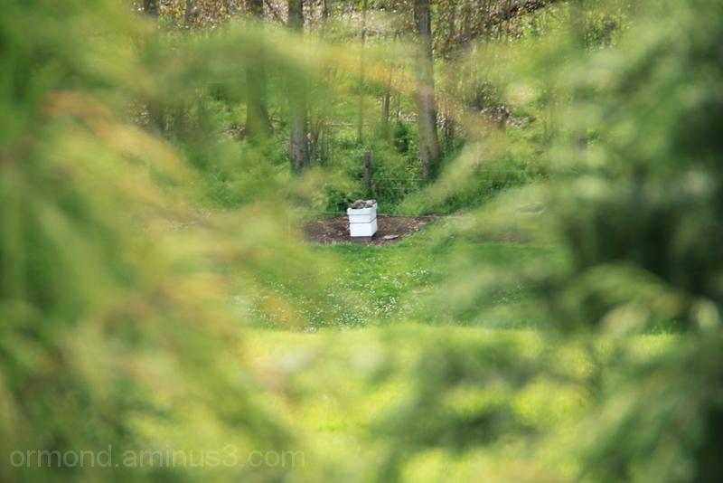 Lone beehive