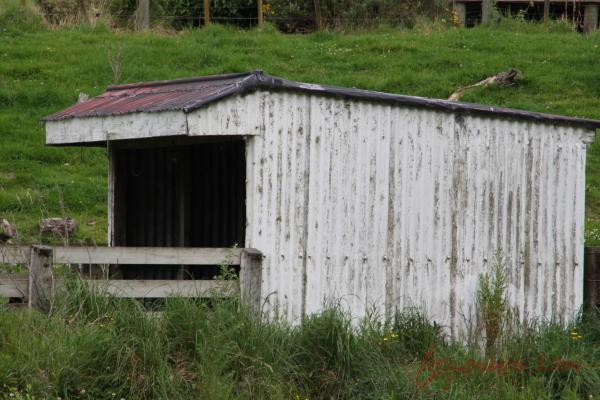 Cattle bail