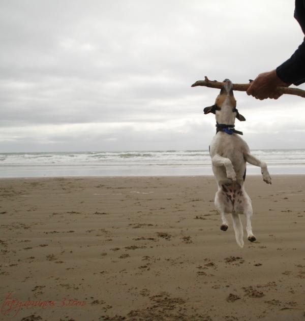 Dog in flight