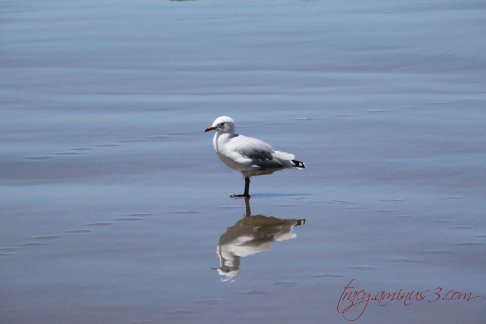 Mirror bird image