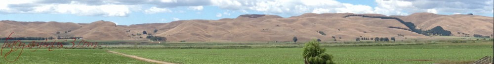 New Zealand Summer dry
