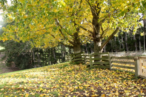 Autumn Colors - in the yards