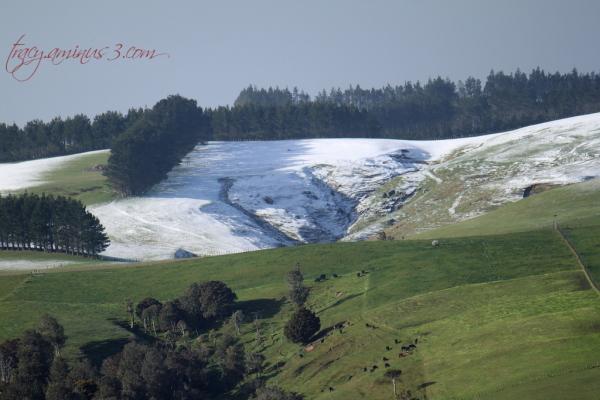 Snowy pastures