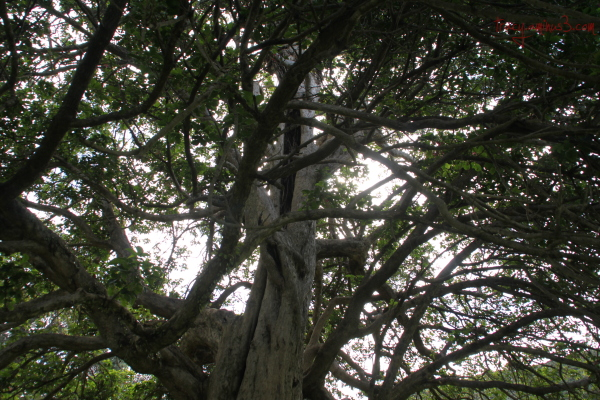 Branches reaching
