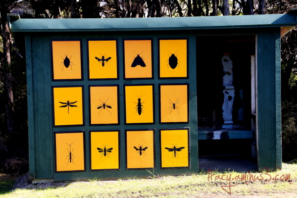 Painted Bus shelter.