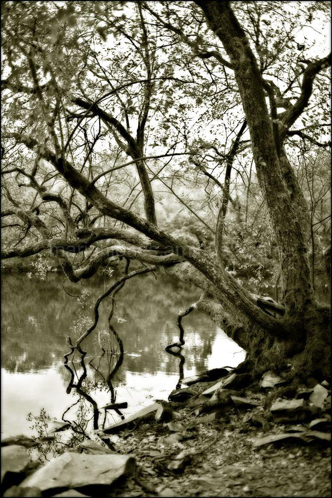lakeside tree, and some slate