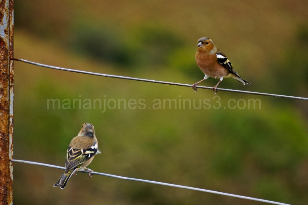 Bird on a wire........