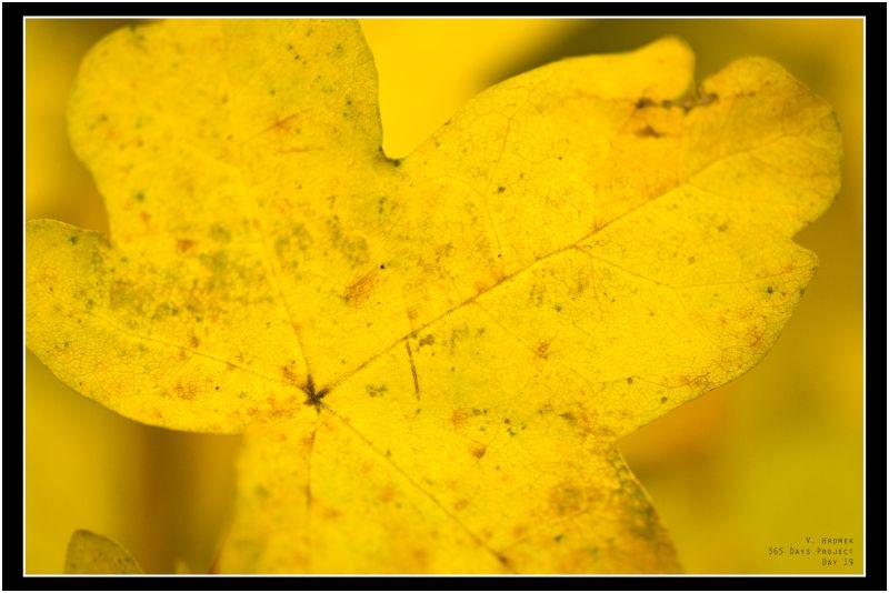 autumn yellow leaf