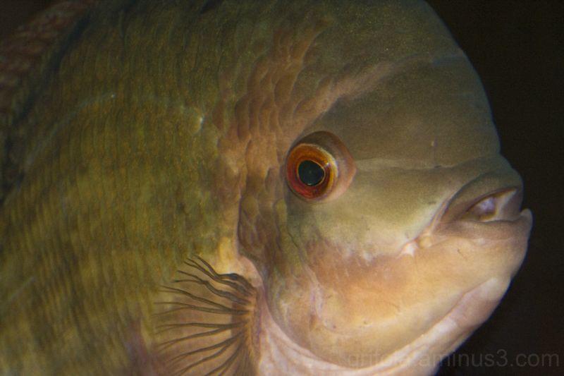 fish at mystic aquarium