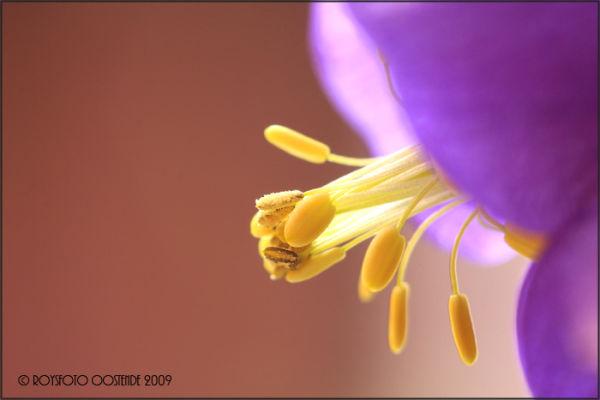 Side of a flower