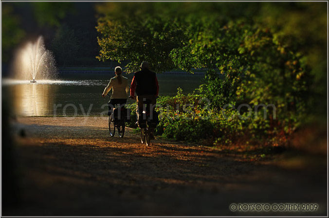 fietsers, bikes, forest, nature,