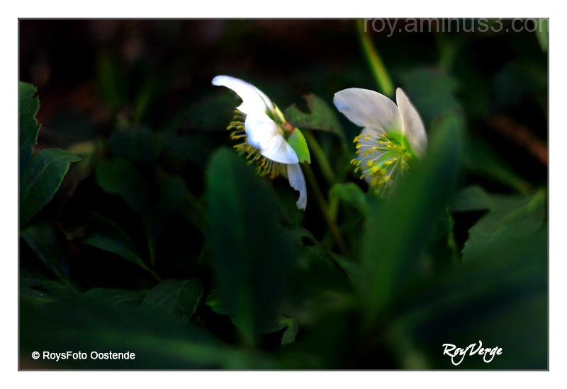 lente in zicht