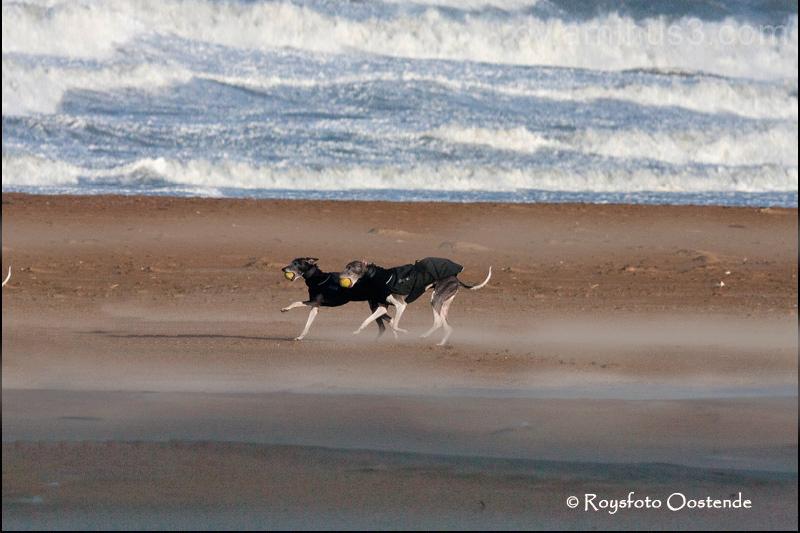 wind en hond