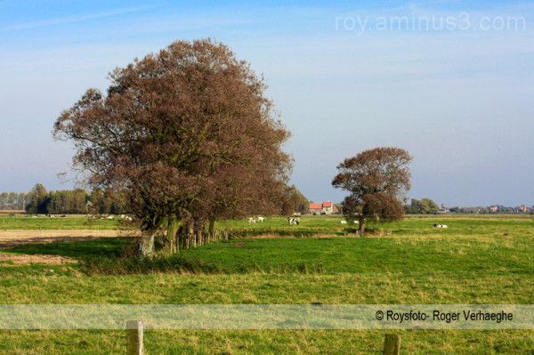 polderbomen