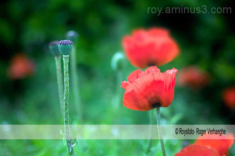 wilde bloemen in het veld