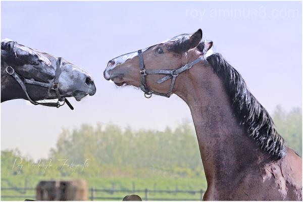 modern horses