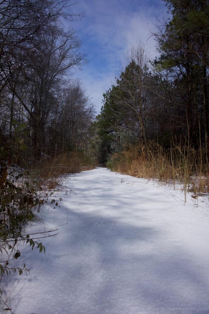 Snow path in an urban park