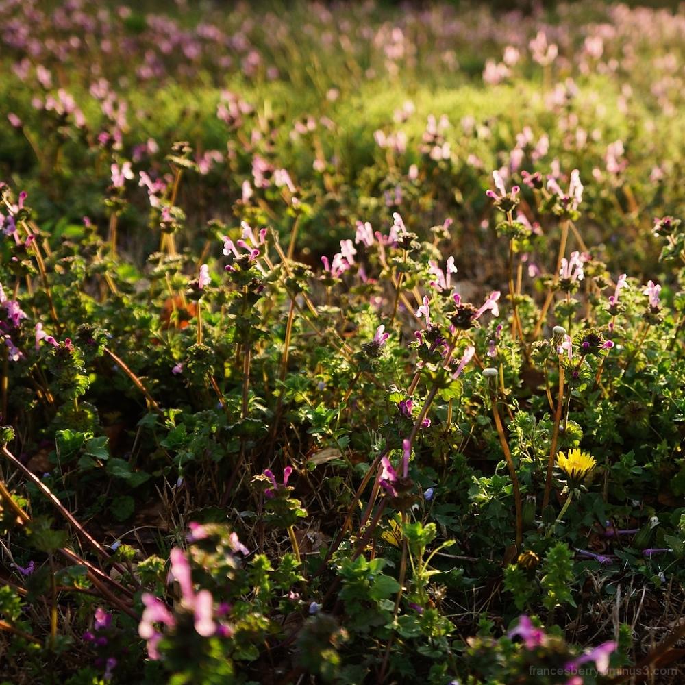 sunlight on a field of wild flowers