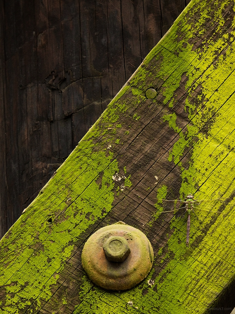 abstract photo green bug old wooden trestle