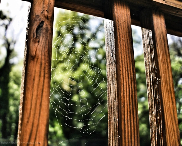 spider web bathed in sunlight against fence posts