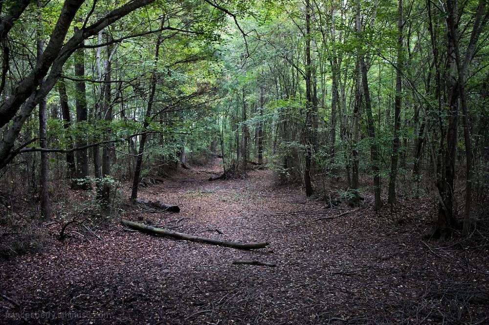 Rural South Carolina, 3/3