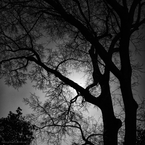 Trees in silhouette and black and white, 1/3