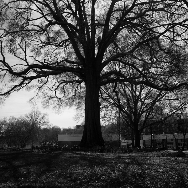Trees in silhouette and black and white, 3/3