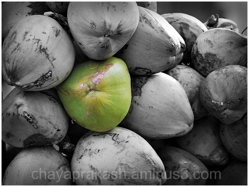 Food Cuisine Coconuts